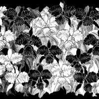 Cattleya, ganzer Schal