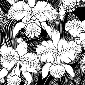 Cattleya, Detail